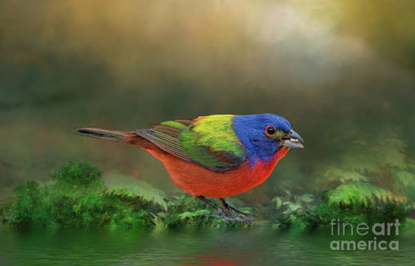 Wall Art - Photograph - Painted Bunting At Woodland Stream by Bonnie Barry