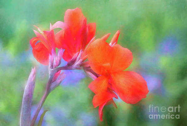 Photograph - Painted Canna In The Evening Light by Anita Pollak