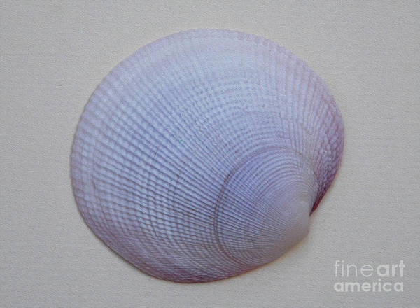 Wall Art - Photograph - Painted Clam Shell No 26 by Skip Willits