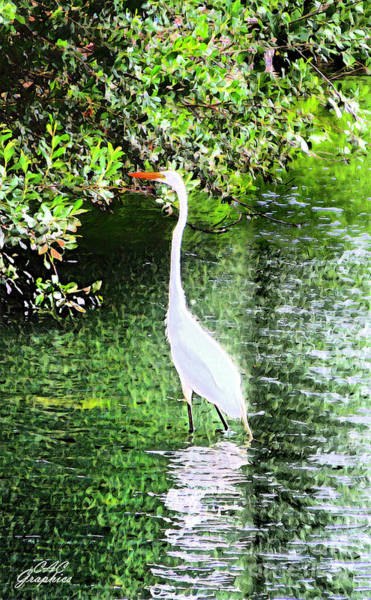 Painting - Painted Egret by CAC Graphics