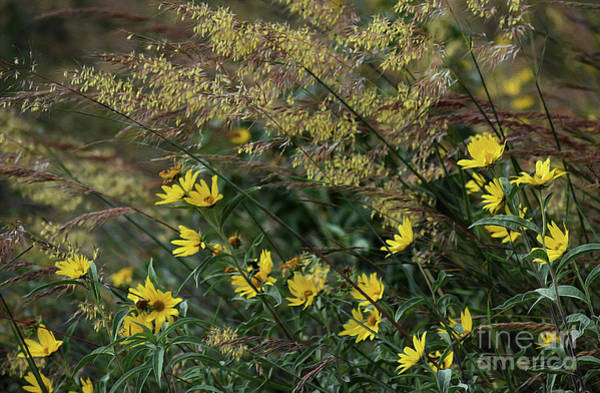Wall Art - Photograph - Painted Fall Flowers by Skip Willits