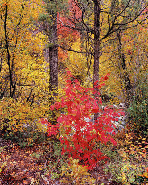 Photograph - Painted Forest by Leland D Howard