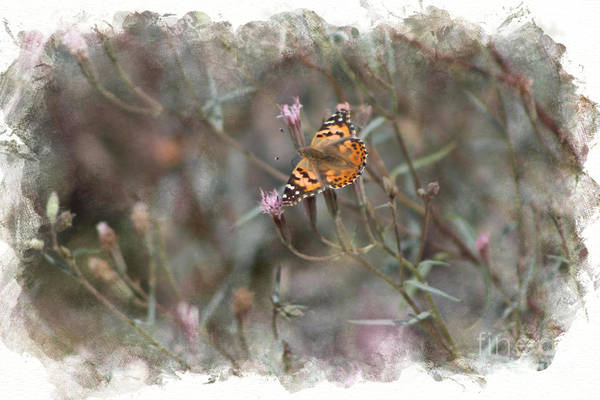 Photograph - Painted Lady Butterflies In Digital Watercolor by Colleen Cornelius