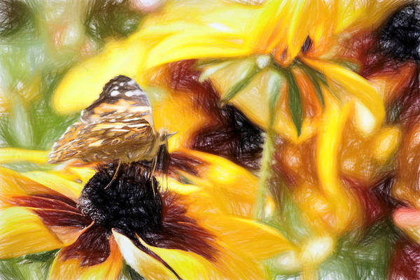 Photograph - Painted Lady Butterfly Abstraction by Don Northup
