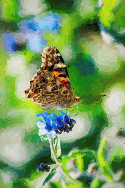 Photograph - Painted Lady Butterfly Blue Flower by Don Northup