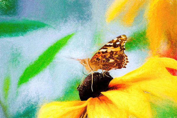 Photograph - Painted Lady Butterfly Colorful Chalk by Don Northup