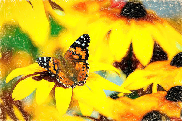 Photograph - Painted Lady Butterfly Colorful Pencil by Don Northup