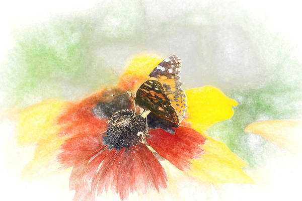 Photograph - Painted Lady Butterfly by Don Northup