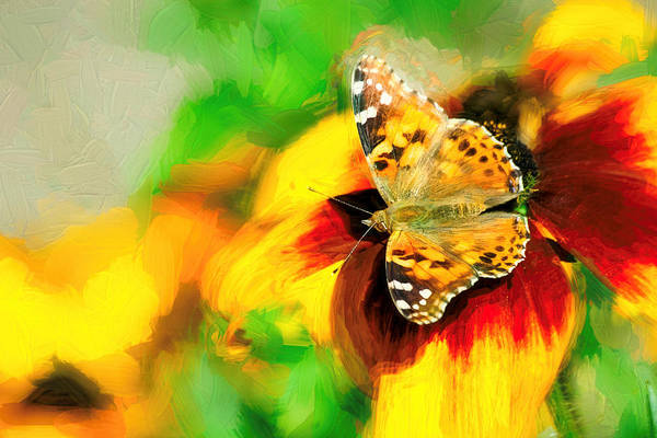 Photograph - Painted Lady Butterfly Impasto by Don Northup