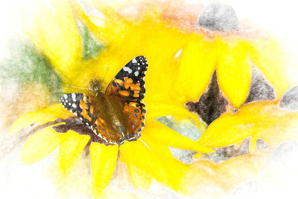 Photograph - Painted Lady Butterfly On Yellow by Don Northup