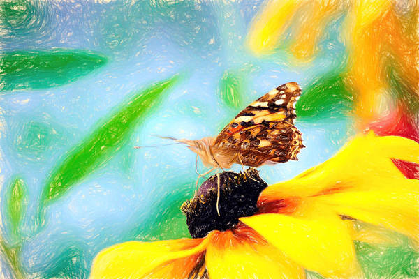 Photograph - Painted Lady Butterfly Pencil by Don Northup
