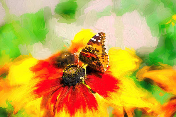 Photograph - Painted Lady Butterfly Rich Impasto by Don Northup
