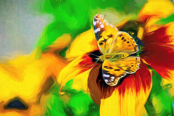 Photograph - Painted Lady Butterfly Swirly Art by Don Northup