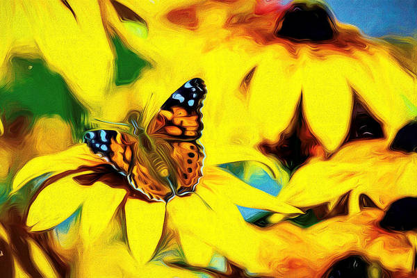 Photograph - Painted Lady Butterfly Swirly by Don Northup
