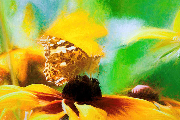 Photograph - Painted Lady Butterfly Wildflower by Don Northup