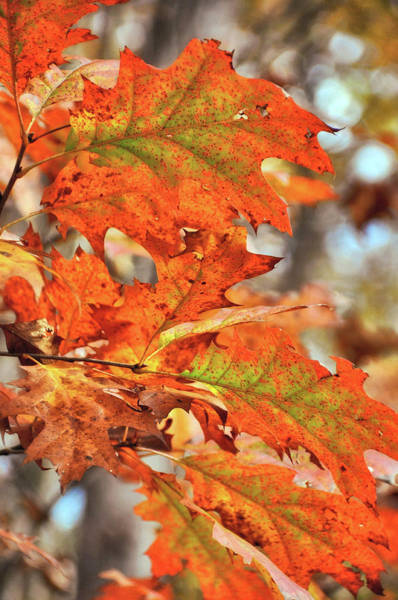 Photograph - Painted Leaves by JAMART Photography