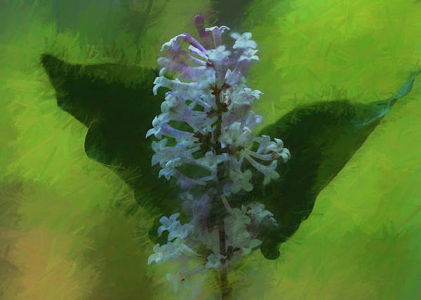 Photograph - Painted Lilac by Cathy Kovarik