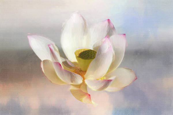 Wall Art - Digital Art - Painted Lotus by Terry Davis