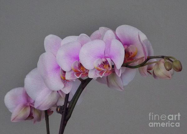 Wall Art - Photograph - Painted Orchids by Skip Willits