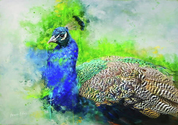 Bird Watercolor Mixed Media - Painted Peacock by Amanda Lakey