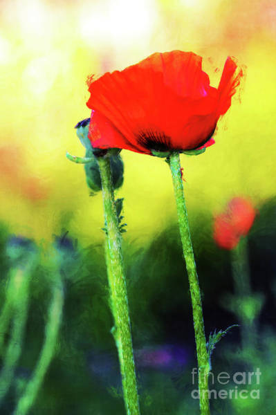 Photograph - Painted Poppy Abstract by Anita Pollak