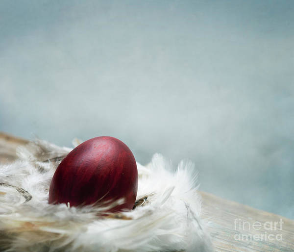 Wall Art - Photograph - Painted Red Easter Egg In Bird Feather Nest Over Vintage Blue Ar by Jelena Jovanovic