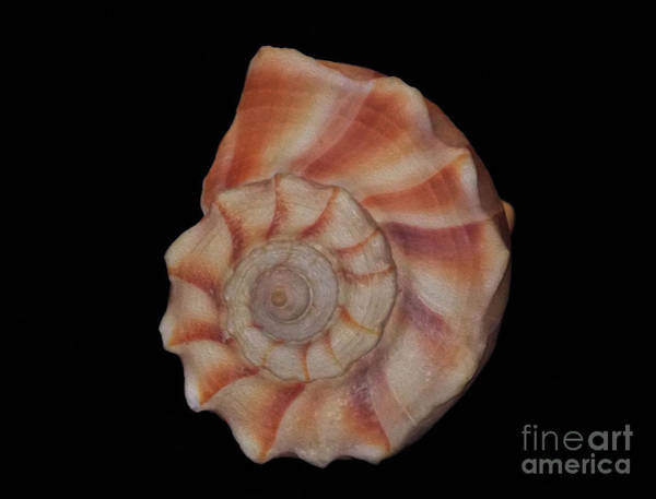 Wall Art - Photograph - Painted Shell No. 6 by Skip Willits