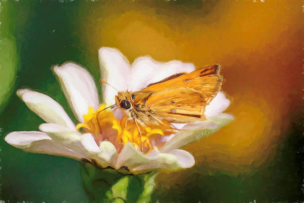 Photograph - Painted Skipper Butterfly by Don Northup