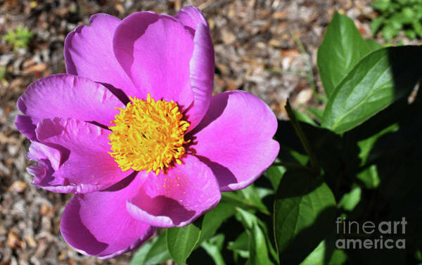 Wall Art - Photograph - Painted Spring  by Skip Willits