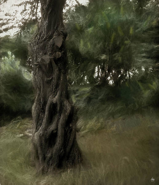 Photograph - Painted Wind In The Cedar by Wayne King