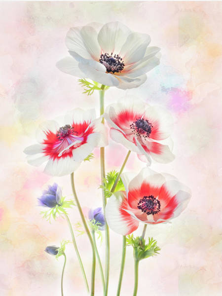 Photograph - Painterly Anemone by Usha Peddamatham
