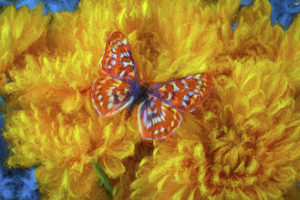 Photograph - Painterly Butterfly by Garry Gay