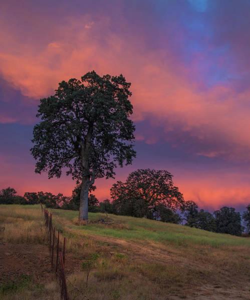 Photograph - Painterly Sunset by Jonathan Hansen