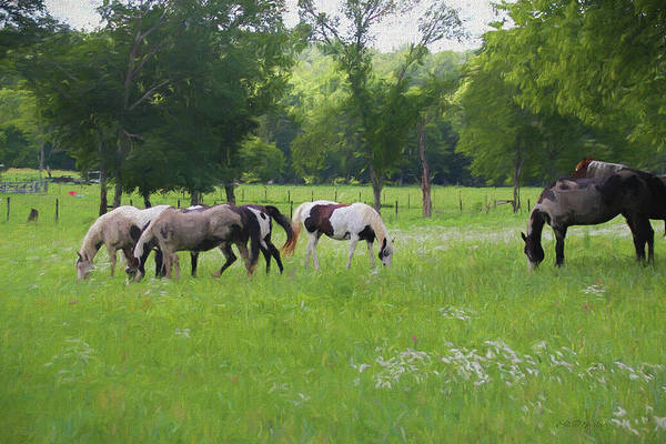 Painting - Paints And Pinto Herd 1367 - Painted by Ericamaxine Price