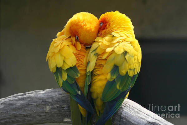 Wall Art - Photograph - Pair Lovebirds by Julia Kuznetsova