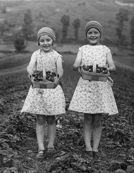 Strawberry Fields Wall Art - Photograph - Pair Of Punnets by Burchell