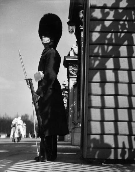 British Armed Forces Photograph - Palace Guard by Chaloner Woods