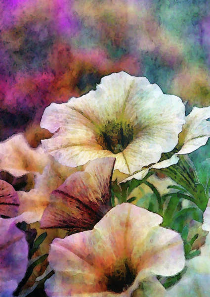 Photograph - Pale Petunias 6465 Idp_2 by Steven Ward