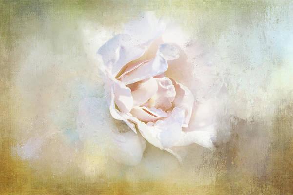 Wall Art - Digital Art - Pale Rose On Texture by Terry Davis