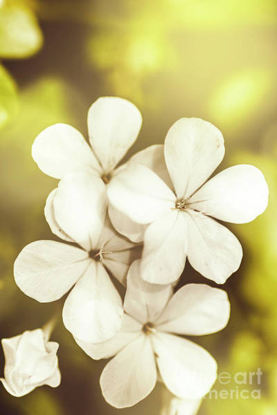 Pale Wildflowers Art Print