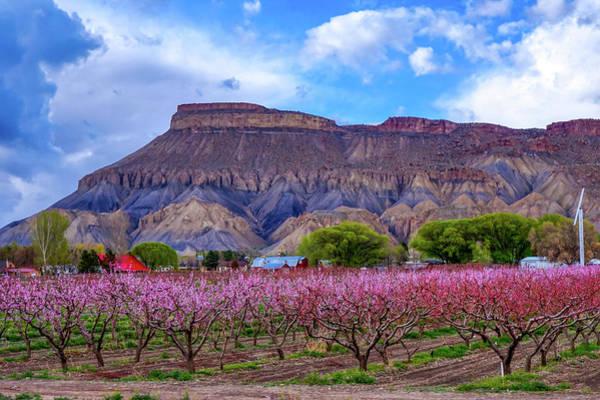 Wall Art - Photograph - Pali Peach Blossoms by David Ross