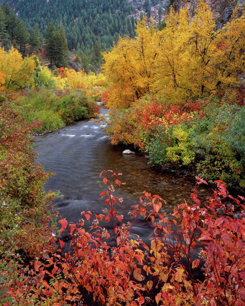 Photograph - Palisades Creek Canyon Autumn by Leland D Howard