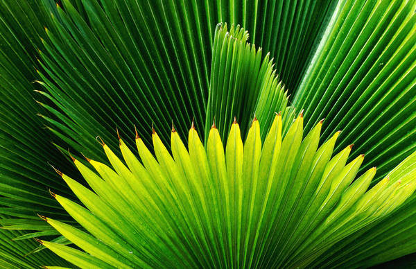 Villa Photograph - Palm At Windjammer Landing Villas by Holger Leue