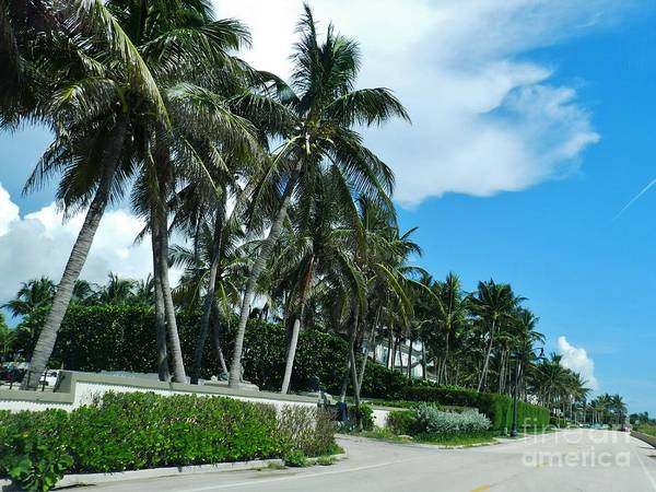 Wall Art - Photograph - Palm Beach 2 by Snapshot Studio