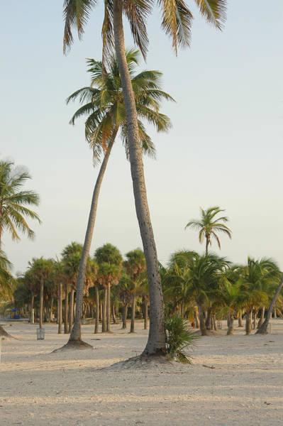 Bermuda Photograph - Palm Beach by Thepalmer