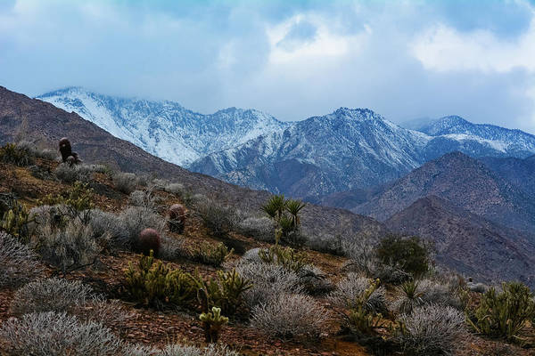 Photograph - Palm Canyon Trail by Kyle Hanson