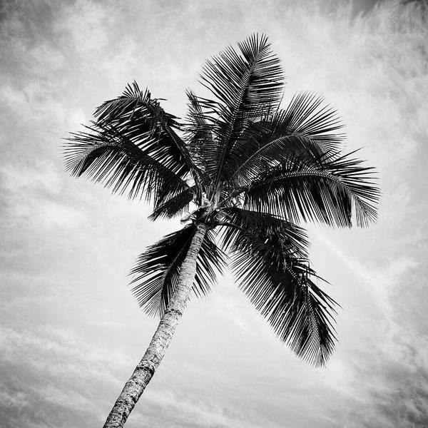 Wall Art - Photograph - Palm Paradise - #4 by Stephen Stookey