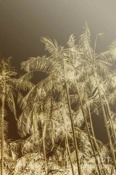 Photograph - Palm Dynamics by Jorgo Photography - Wall Art Gallery