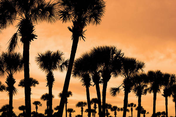 Burnt Orange Photograph - Palm Fever by Lumenphoto