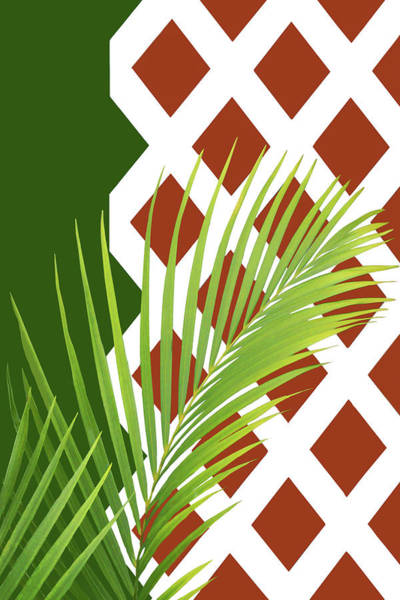 Wall Art - Photograph - Palm Fronds And Trellis by Nikolyn McDonald